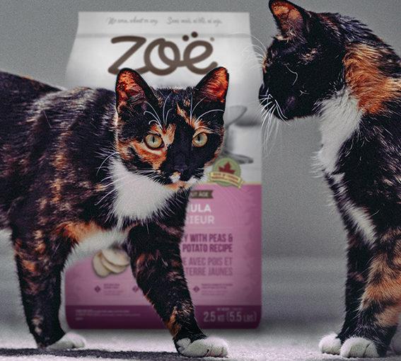ZOE-FACEBOOKBANNER_1