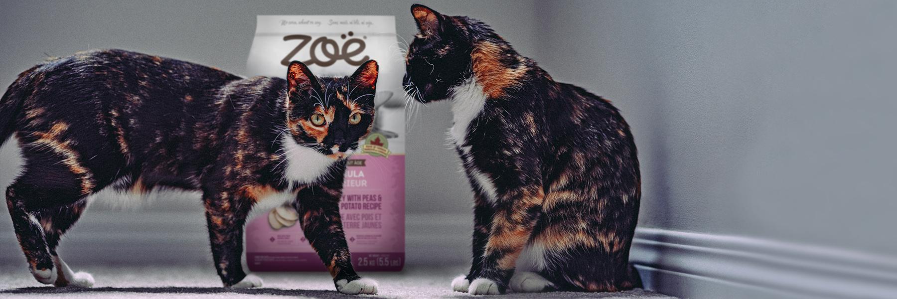 Zoe_Cat_Photo_Edit_Dryfood